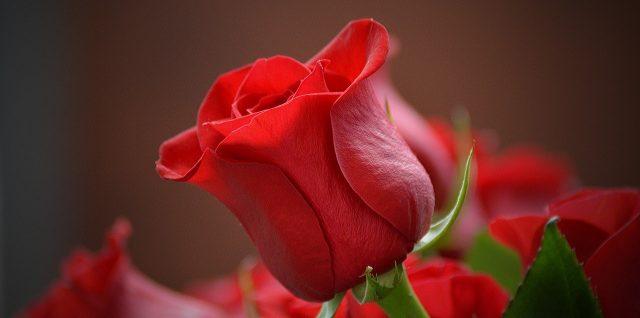 signification de la couleur rose